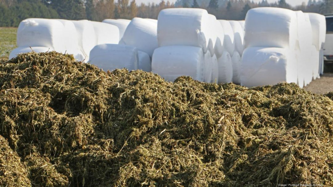 hemp in usa's rural economy
